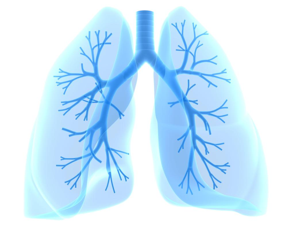 What is the best way to exercise with bronchitis bronchitis is inflammation of the bronchial tubes in the lungs ccuart Gallery