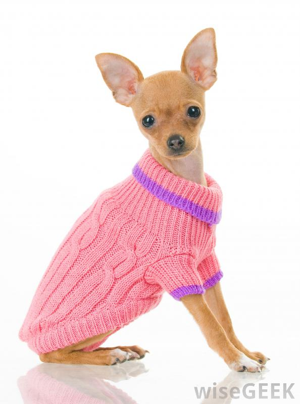 Big Dog Wearing Sweater What are Dog Sweaters