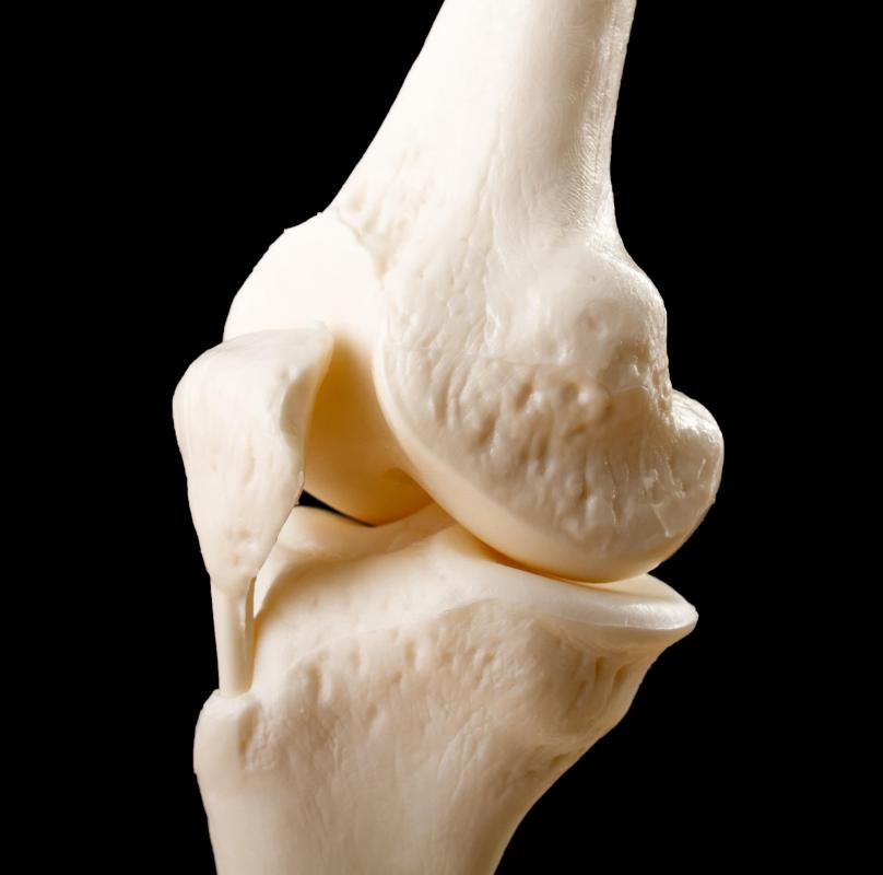 Quadriceps Tendon Anatomy What is The Quadriceps Tendon