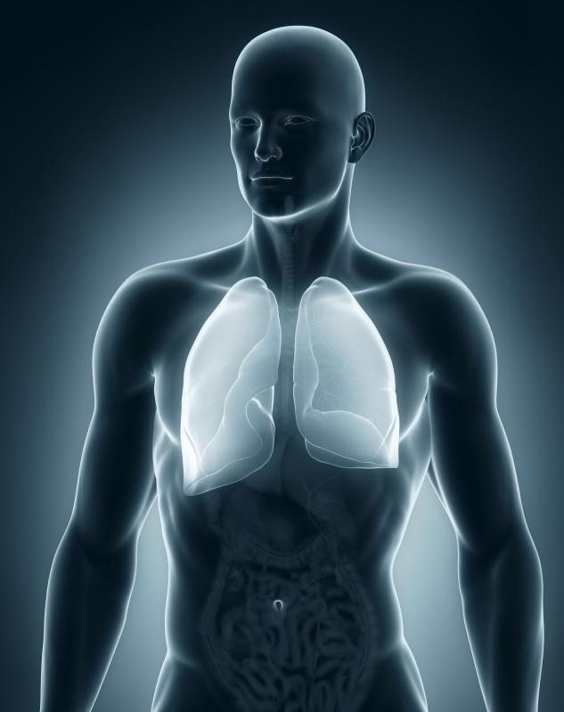lungs meaning in hindi