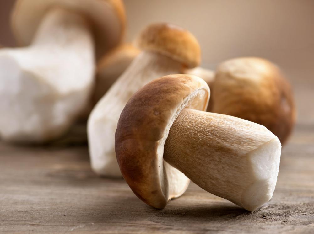 what is mushroom
