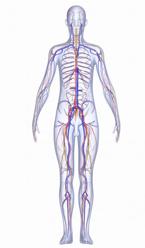 Human Body Nervous System