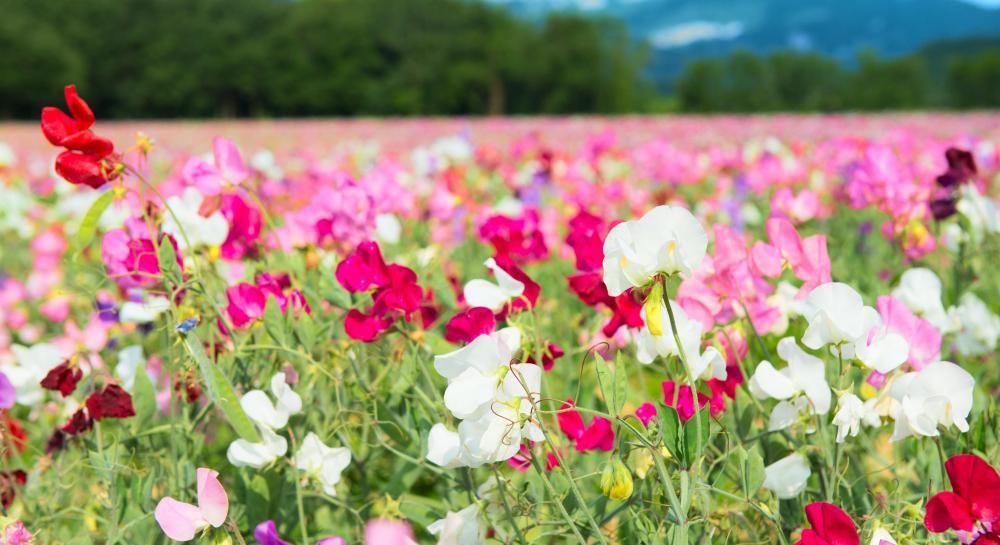 Potium Nitrate Uses Garden Garden Ftempo