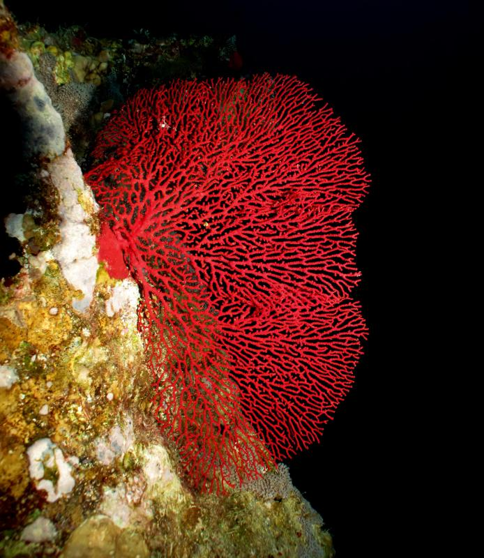 What are the different types of coral decor with picture living coral is sometimes harvested and used in aquariums publicscrutiny Gallery