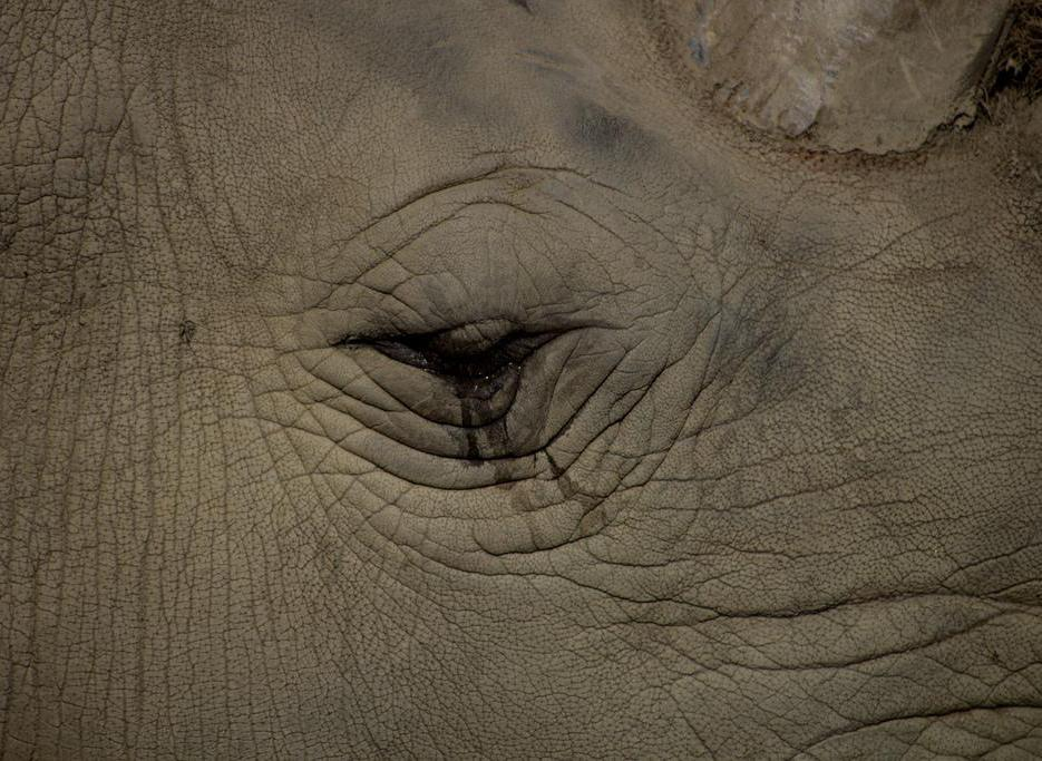 Which animal cries tears when distressed like humans do?