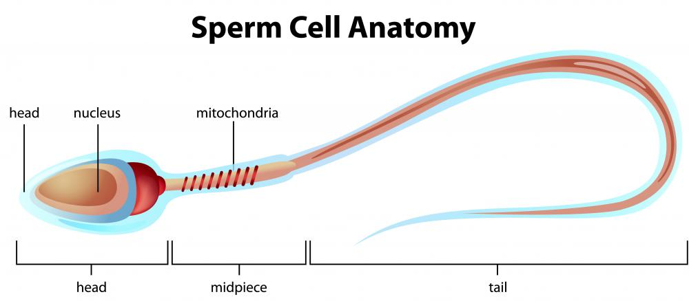 Yellow sperm stain why does White semen