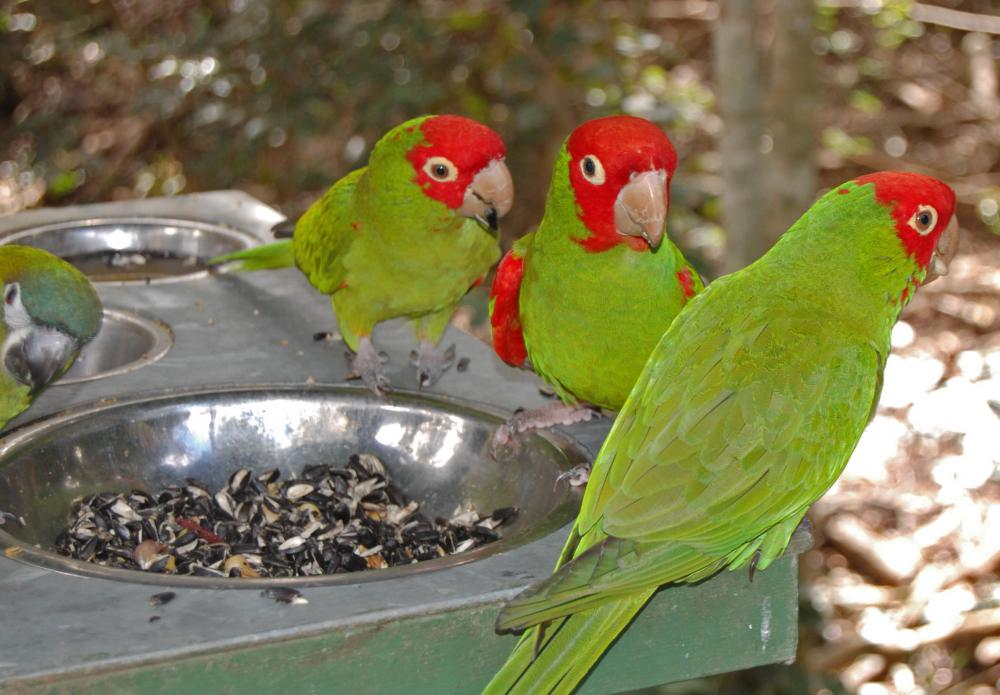a Parrot s Lifespan Parrot Lifespan