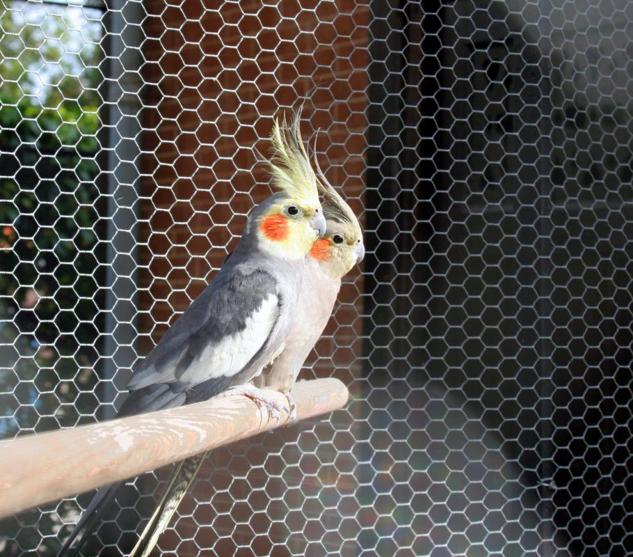 How Do I Choose The Best Aviary Wire Mesh With Picture