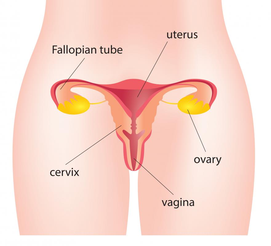 What is a fetus papyraceus with pictures in rare circumstances a fetus may instead be flattened against the side of the uterus by the sibling or siblings creating a fetus papyraceus ccuart Images