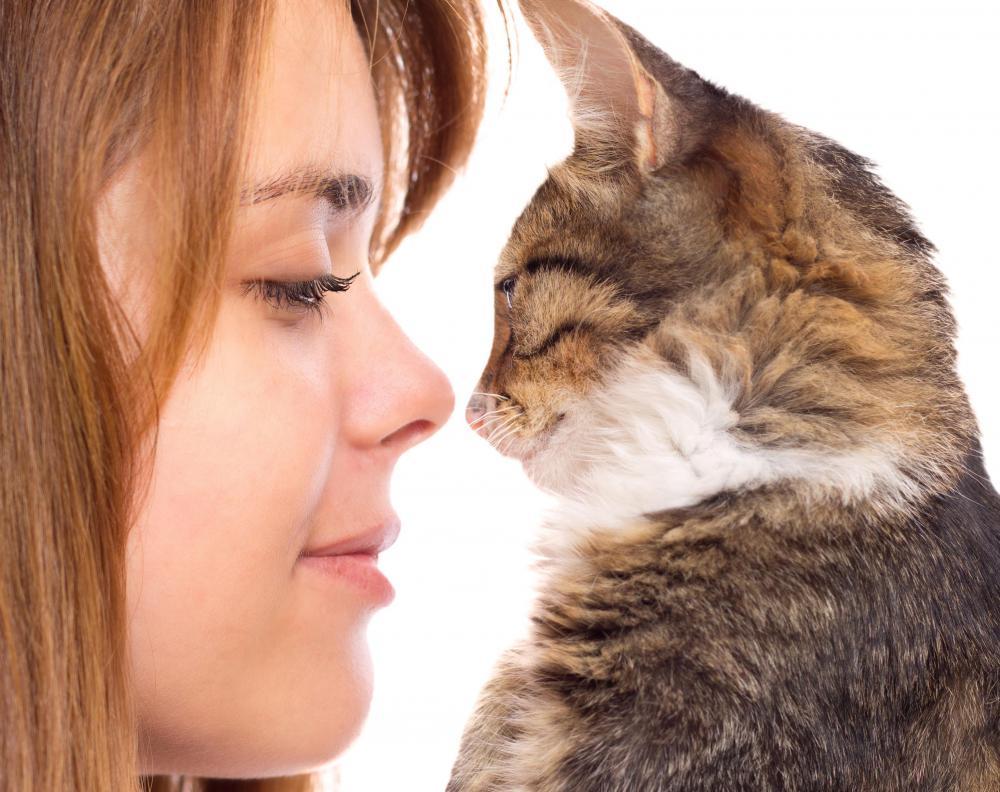 Swollen Lymph Nodes Groin Women Why do Lymph Nodes Become