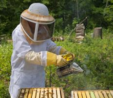 Keeping bees can enhance polination and improve yields.