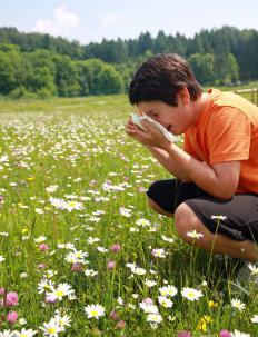 Tree pollen often causes an allergic reaction.