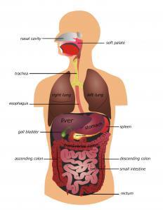 Orange semen may be indicative of gallbladder or liver problems.