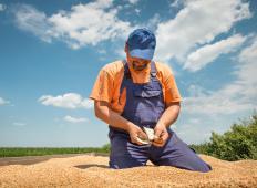 A productive harvest is a big reward for a farmer.