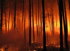 Longleaf pine forests recover relatively well from forest fires.