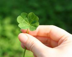 Practicing pattern recognition might help someone find a four leaf clover.