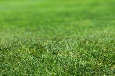 A healthy lawn.
