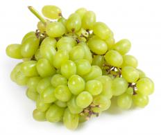 Green grapes are a major category of wine grapes.