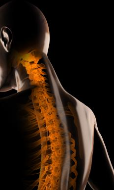 The pedicle is located on the human spine.