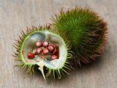 Achiote fruit.