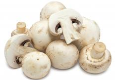 Mushrooms may be featured in ragout.