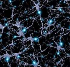 Synapses are the connections that allow neurons to send information to each other.