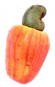 A raw cashew.