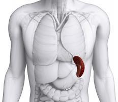 Mediterranean anemia may cause spleen enlargement.