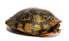 There are more than 400 known turtle species.