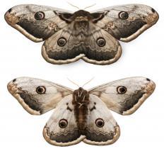 Moths.