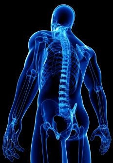 Damage to the spinal cord may cause ankle clonus.