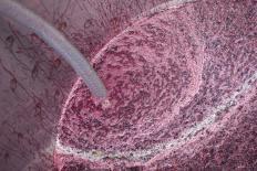 Merlot fermenting in a vat.