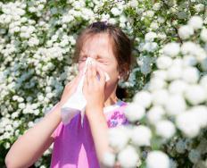 Postnasal drip caused by allergies may cause morning phlegm.